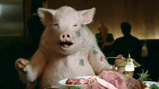 gruba świnka