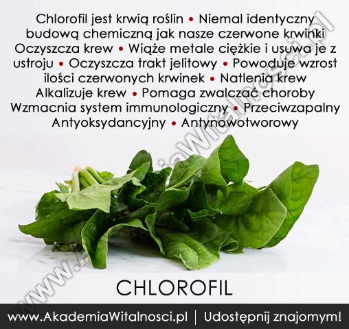 chlorofil2